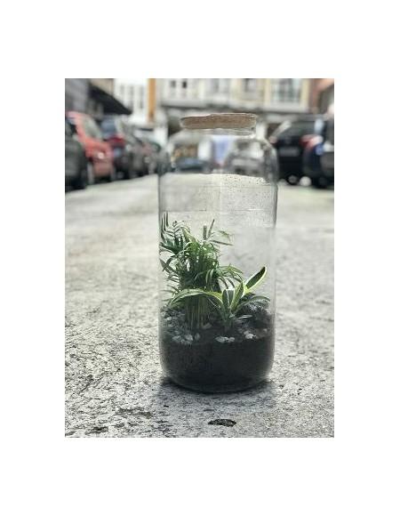 Jardines naturales en miniatura