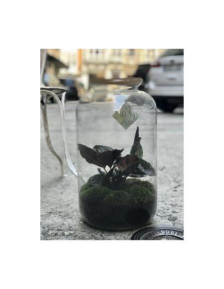 Mini jardín con planta natural