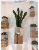 Cactus Agave con 4 ramas secundarias