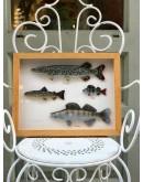 Cuadro francés con peces de terracota pintados a mano enmarcados en madera de cerezo