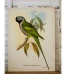 Láminas de pájaros